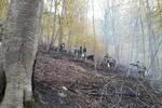 ۱۸۰ هکتار از جنگلهای گلستان در آتش سوخت