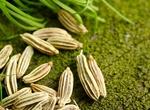 افزایش اثربخشی عصاره گیاه رازیانه با فناوری نانو