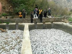 مجتمع پرورش ماهیان سردابی ریجاب