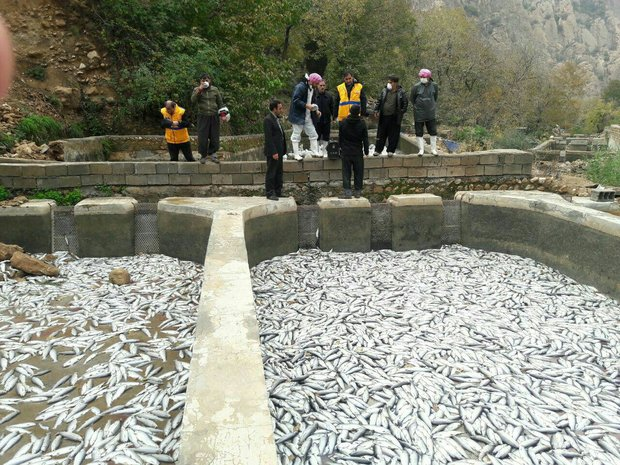 Significant rise in trout exports