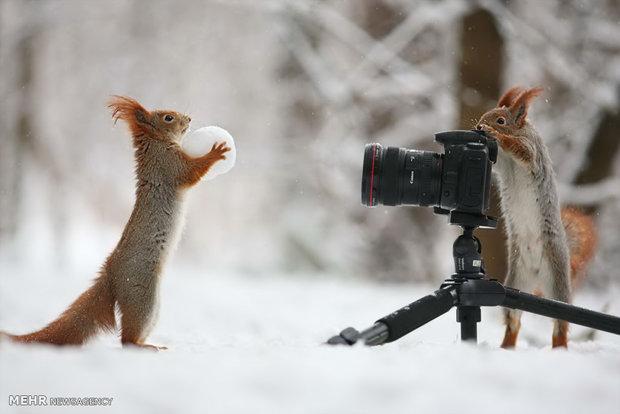حیوانات روی برف