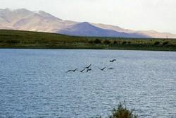 ۲۸۶ گونه پرنده در آذربایجان غربی شناسایی شد