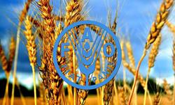 هشدار سازمان ملل درباره افزایش گرسنگی در جهان/ تعداد گرسنگان تا ۲۰۳۰ از ۸۴۰ میلیون نفر می گذرد!