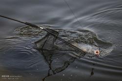 دام های متخلفان صید از دریاچه سد زاینده رود جمع آوری شد