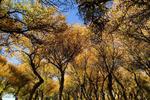 طبیعت پاییزی جنگل پدگان شهرستان مهرستان