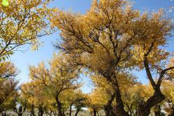 مردمان دیار«نخل و آفتاب»در انتظار گردشگران/مهرستان بهشت گنجینه ها