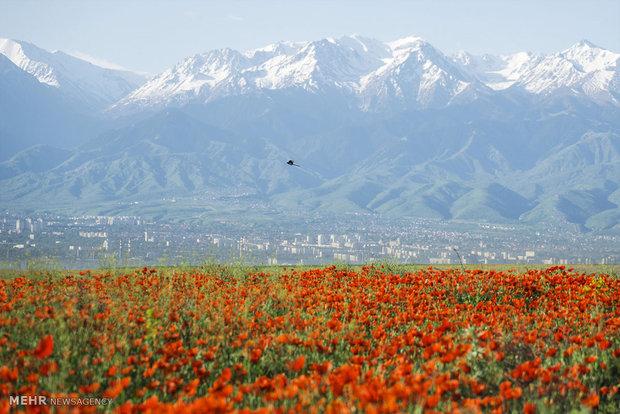 موافقت رئیس جمهور ترکمنستان باحفاری آثارتاریخی درمسیر جاده ابریشم