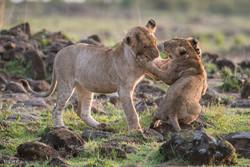 جنگلی حیوانات کی منتخب تصاویر