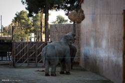 حیوانات باغ وحش ارم