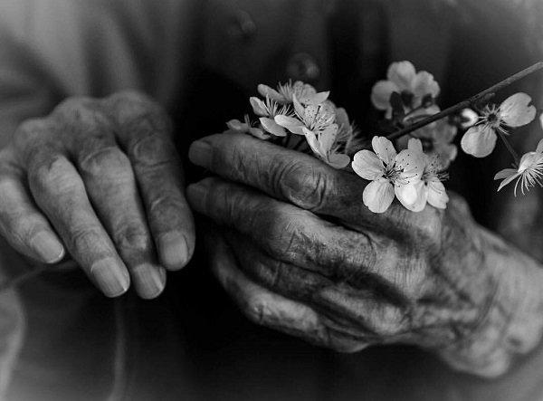 «سوری» گلی که در جهنم رویید/ داستانی که بر هر سر بازاری هست