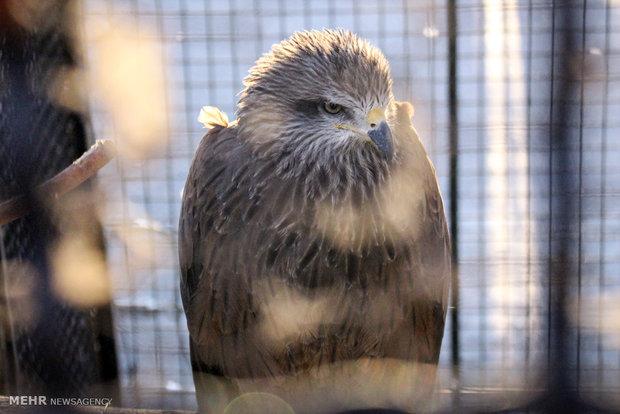 Eram Zoo home to countless animal species