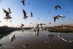 «خوتکا» پیشمرگ پرندگان مهاجر شد/ مهمانکشی ممنوع
