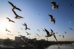 اہواز میں کارون کے ساحل پر مہاجر پرندوں کی آمد
