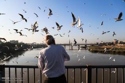 جهنمی برای پرندگان مهاجر/ کشتار روزانه ۳۰۰۰ پرنده در فریدونکنار