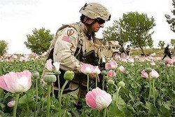 NATO's responsibility toward drug production in Afghanistan