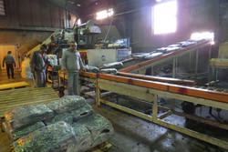 خودکفایی تولید بذر و ماشین آلات صنعت قارچ در شرکت جوانه قزوین