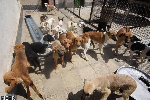 اتلاف سگهای ولگرد در شادگان با اسلحه ممنوع است
