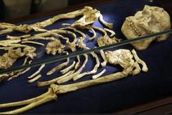 کشف اسکلت ۳.۶ میلیون ساله در آفریقای جنوبی