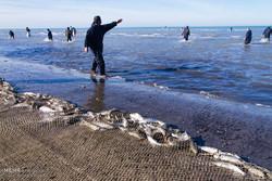 افزایش صید ماهیان استخوانی در رودسر/۱۸۰ تُن ماهی صید شد