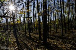 پاییز در جنگل لاویج نور