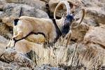 منطقه حفاظت شده «خانگرمز» در استان همدان