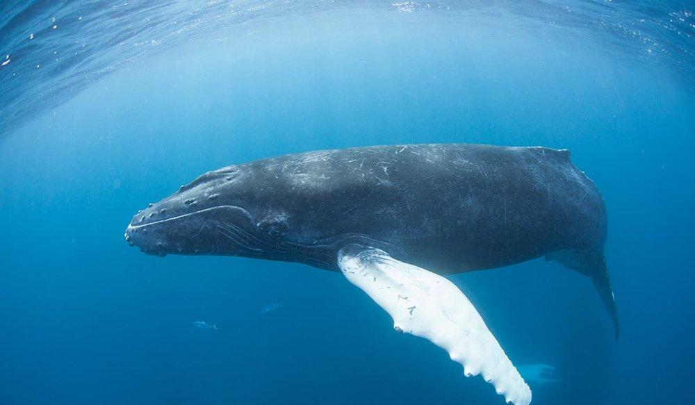 حکایت ما و تنهاترین نهنگ دنیا