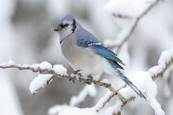 آغاز سرشماری زمستانه پرندگان آبزی در همدان