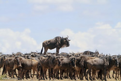 التصوير الهزلي في عالم الحيوانات / صور