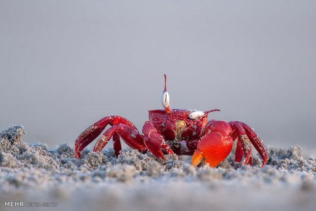 التصوير الهزلي في عالم الحيوانات