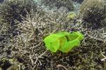 سالانه ۱۲ میلیون تن پلاستیک در اقیانوسها رها می شود