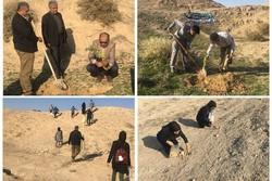 اجرای ۷۵۰ هکتار بذرکاری و جنگل کاری در پردیس