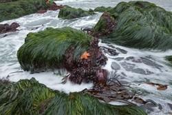 إيرانيون يطوّرون بطاريات الليثيوم بالطحالب الضارة في بحر قزوين