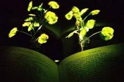 رشد گیاه در تاریکی