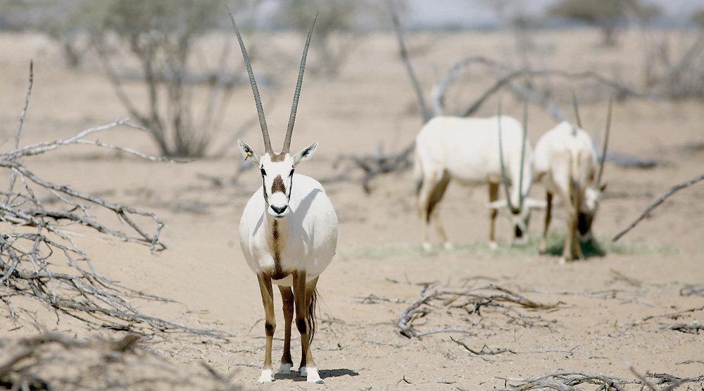 Zoos seen as saviors of endangered animals - Tehran Times