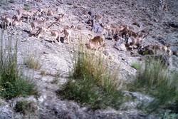 معادن خُرد مراتع یزد را میبلعد/صدای محیطزیست هم به جایی نمیرسد