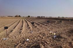 روند کاهشی تولید محصولات زراعی در مازندران