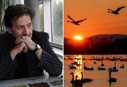 ابوالفضل پورعرب درخواست توقف کشتار پرندگان مهاجر فریدونکنار