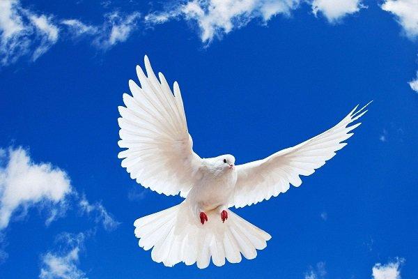 پیشگیری اجتماعی اساس کار هیئت صلح و سازش است