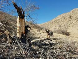 ۶۷ هکتار از جنگل های سوخته پاسارگاد احیاء شد