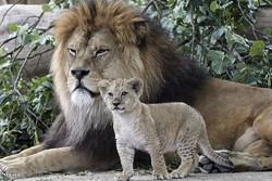 جنگلی حیوانات کی منتخب تصویریں