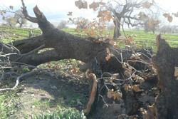 تعطیلی پروژه راهسازی ایلام- سرابله به دلیل تخریب جنگل