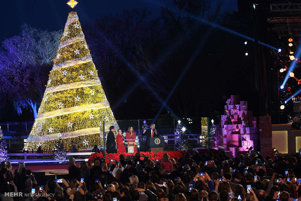 Dünyanın dört bir tarafındaki Noel ağaçlarından kareler