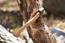 تبرزدن به درخت
