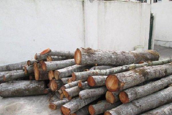 ۱۶ تُن چوب قاچاق در شهرستان سیاهکل کشف شد