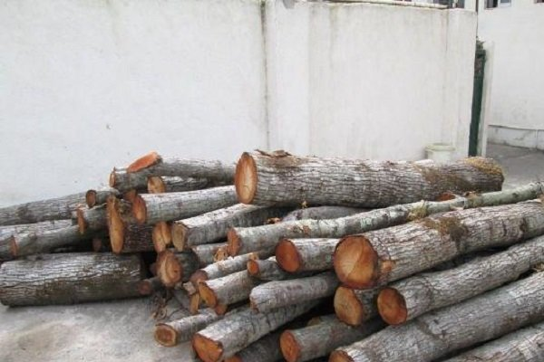 چوب قاچاق - کراپشده