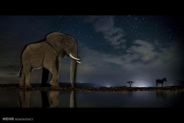 برندگان مسابقه عکاسی حیات وحش 2017