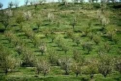 توسعه باغات در ۴۶ هزار هکتار از استان های مرزی کشور