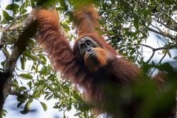 مهمترین کشف دنیای حیوانات در ۲۰۱۷/ موجوداتی که از انقراض بازگشتند