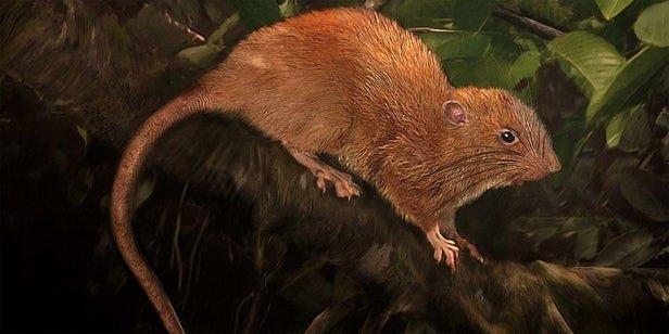 مهمترین کشف دنیای حیوانات (موجودات در حال انقراض)