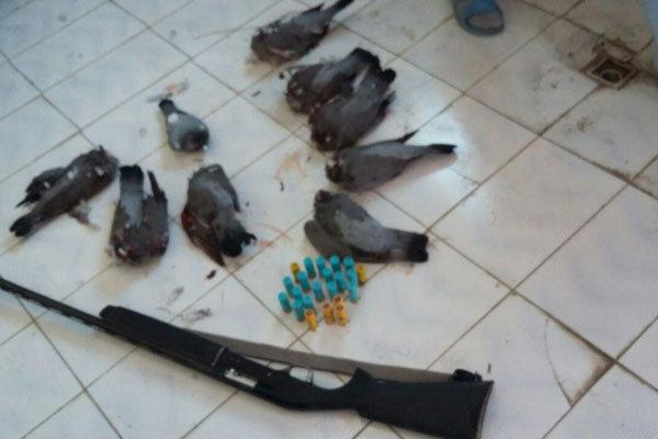 شکارچی پرندگان وحشی در دالاهو دستگیر شد